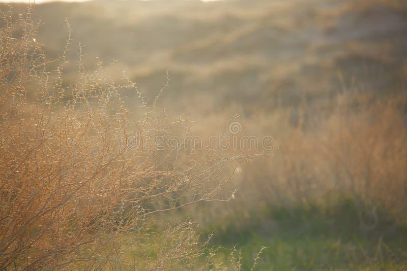Estepa de la primavera imagenes de archivo