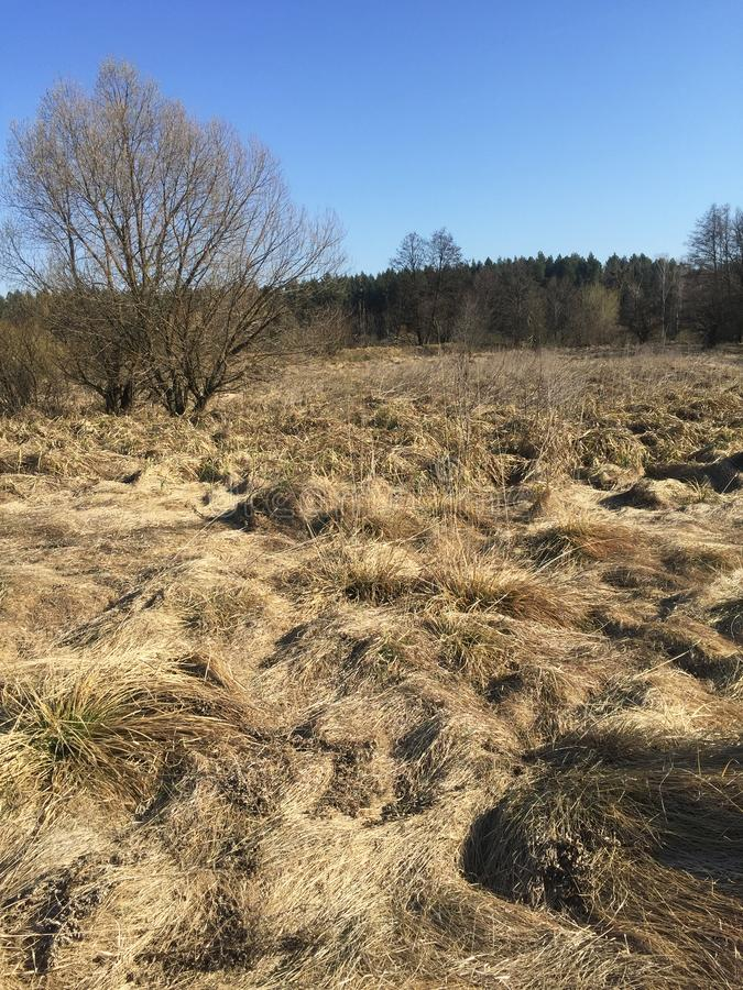 Estepa de la primavera de la arena ?rboles y arena en fondo del cielo azul fotos de archivo libres de regalías