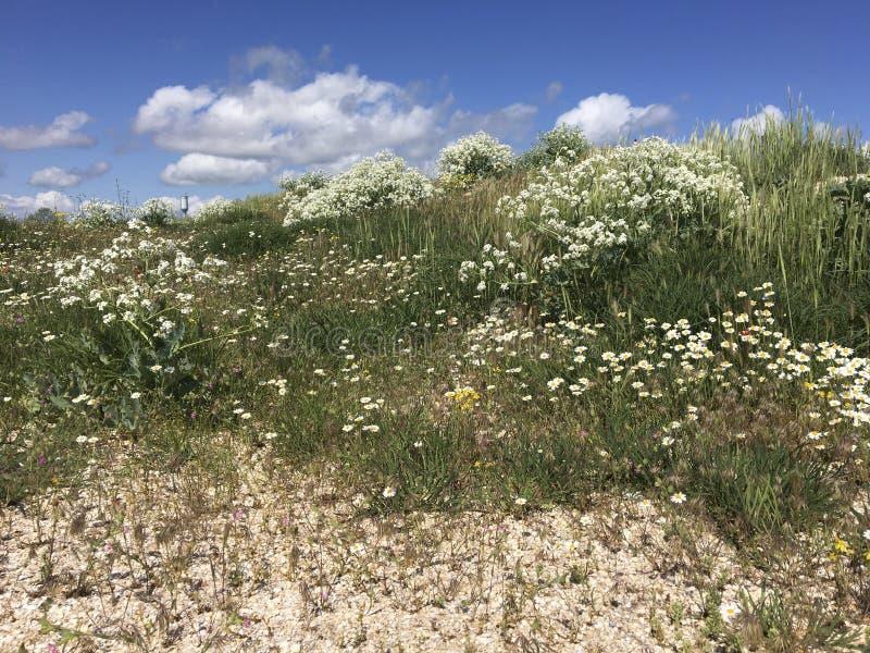 Estepe na mola O céu azul, a grama do estepe e as flores fecham-se acima Textura natural, fundo imagens de stock