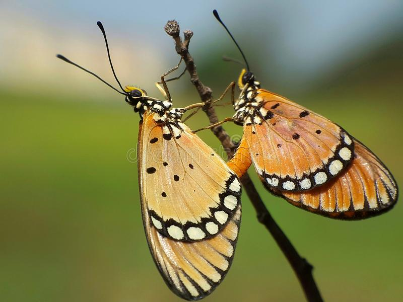 Estera de la mariposa foto de archivo libre de regalías