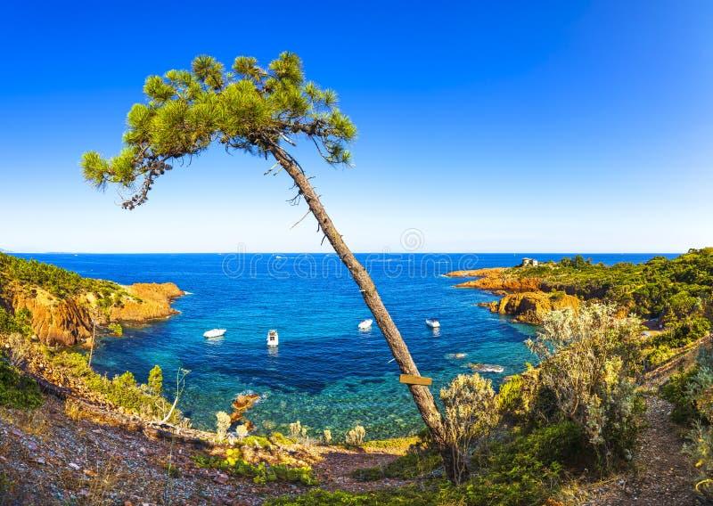 Esterel, tree, rocks beach coast and sea. Cote Azur, Provence, F stock images
