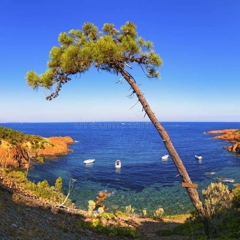 Esterel, tree, rocks beach coast and sea. Cote Azur, Provence, F stock photography