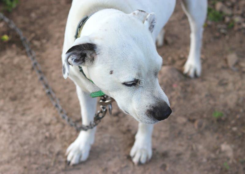 Esterno dimenticato del cane fotografia stock