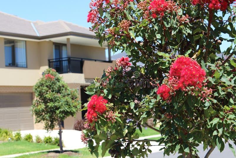 Esterno moderno Victoria Australia di architettura immagine stock