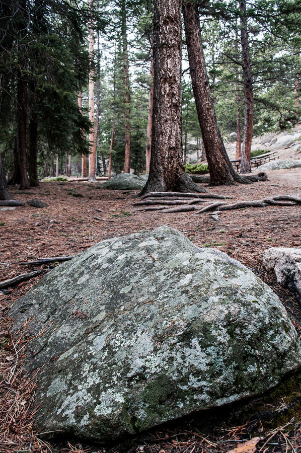 Estes Park Colorado Rocky Mountain Forest Landscape. / large boulders in foreground royalty free stock image