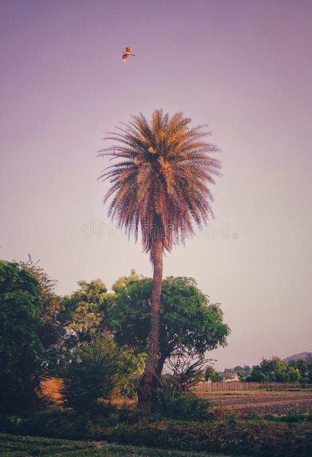 Estetyczny wizerunek drzewko palmowe z orła lataniem na górze go obraz royalty free