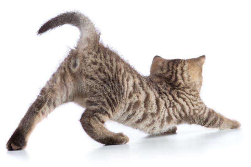 Esticão bonito do gatinho do gato malhado do gato isolado no fundo branco imagem de stock royalty free