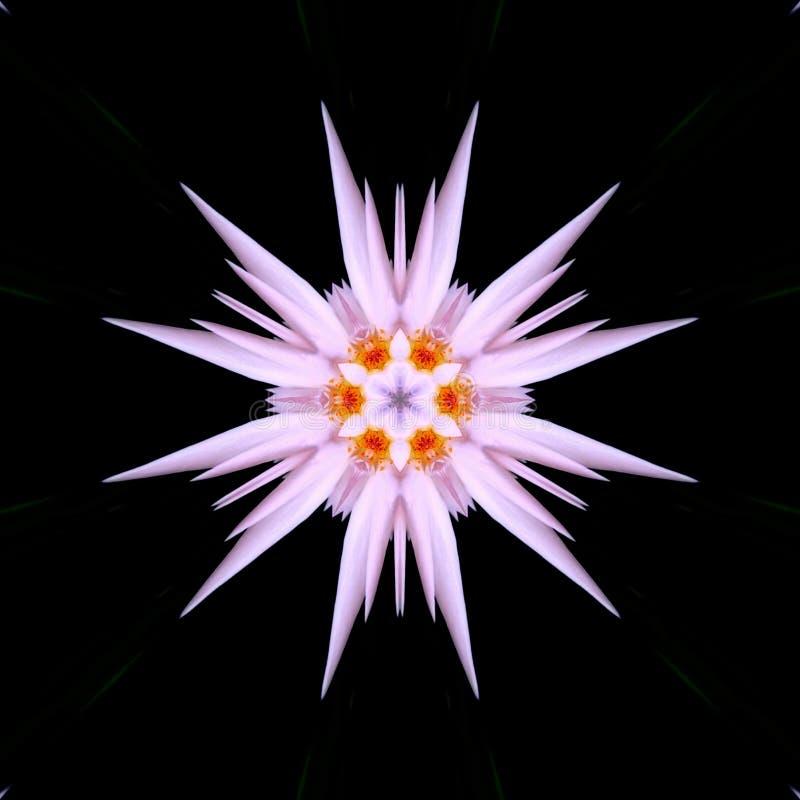 Esticar Kaleidoscope Editar com Flores Rosa ilustração do vetor