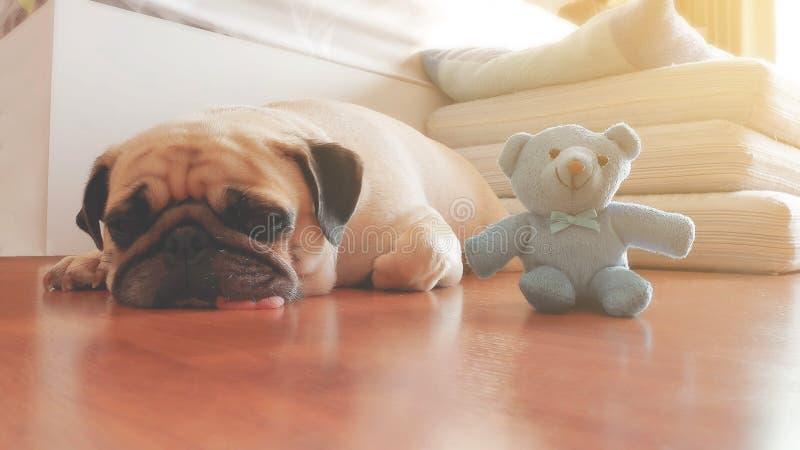 Estilo da cor do vintage do sono do cão do Pug com bonecas imagens de stock royalty free