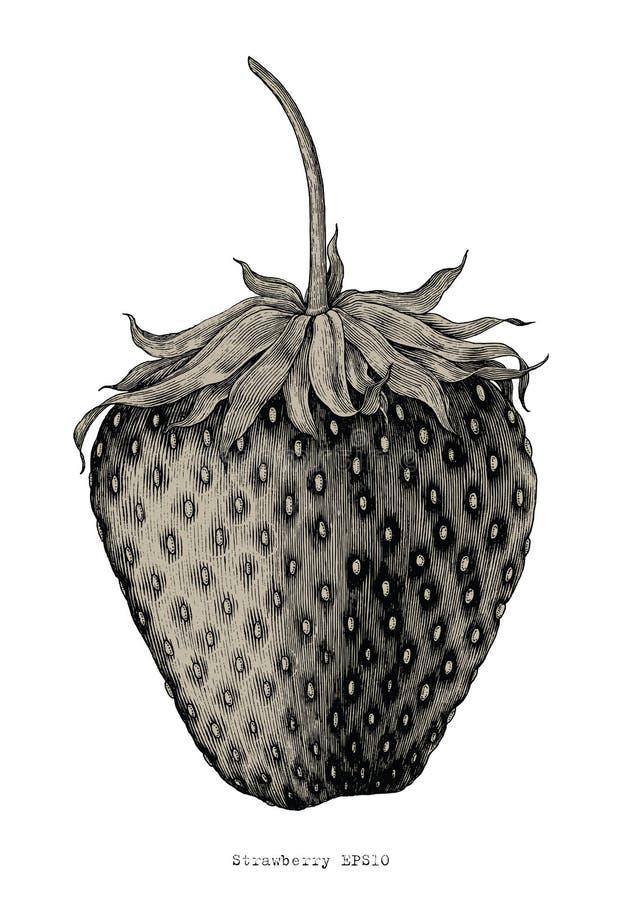 Estilo da ilustração da gravura do vintage do desenho da mão da morango ilustração do vetor