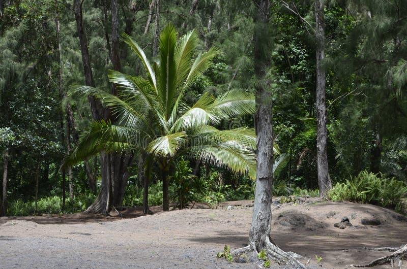 Estilo de Hawaii de la isla de Gilligans imagen de archivo