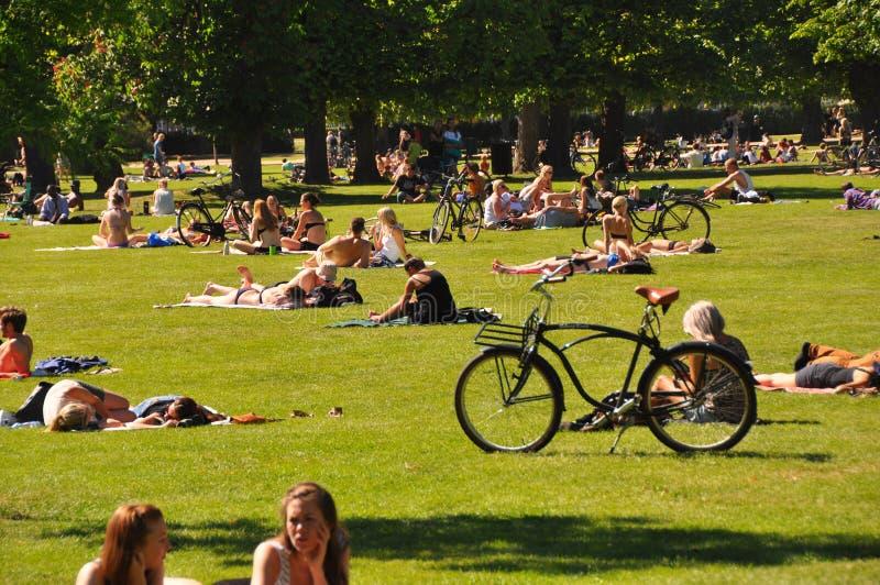 Estilo de vida urbano - os povos que tomam sol na cidade estacionam, Copenhaga imagens de stock