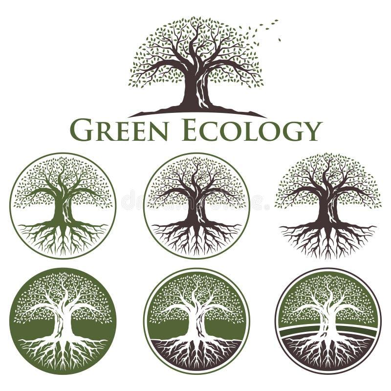 Estilo del roble de la ecología - árbol viejo Logo Collection ilustración del vector