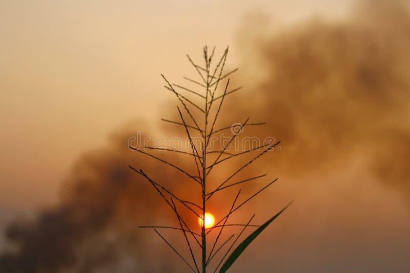 Estilo del vintage del campo de hierba del paisaje de la naturaleza silueta en puesta del sol del verano foto de archivo