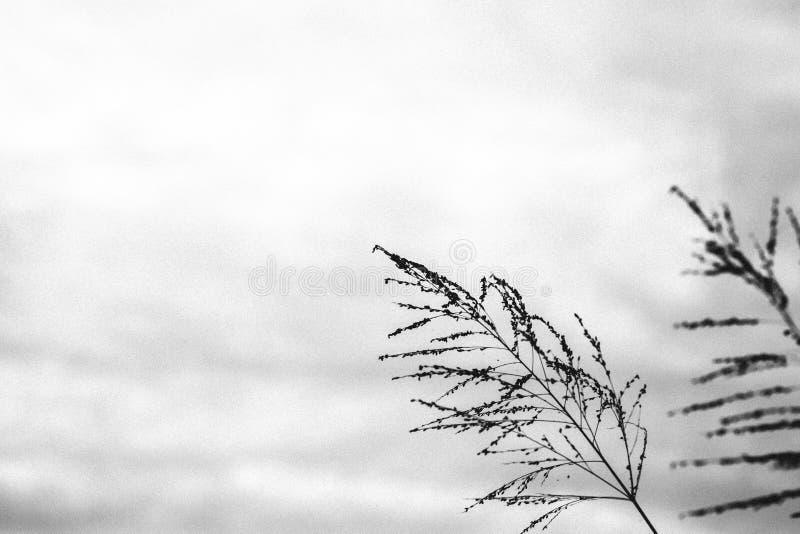 Estilo del vintage de la flor en blanco y negro fotos de archivo