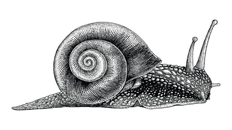Estilo del vintage del dibujo de la mano del caracol libre illustration