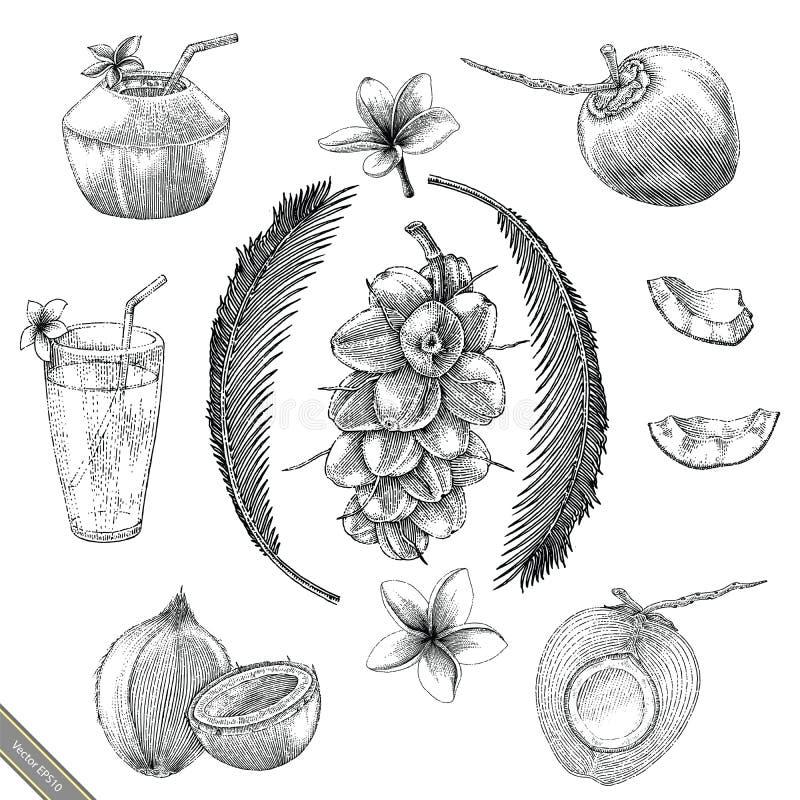 Estilo del vintage del dibujo de la mano de la colección del coco stock de ilustración