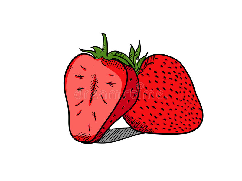 Estilo dibujado mano de la fresa simple ilustración del vector