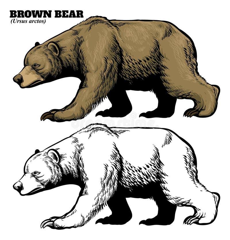 Estilo do desenho da mão do urso marrom ilustração do vetor