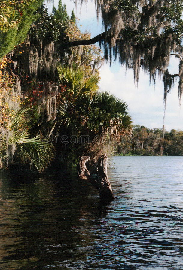Estilo do rio de Florida imagem de stock royalty free