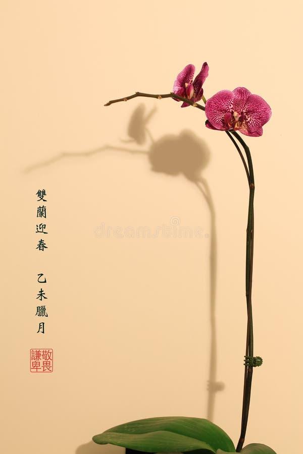Estilo Orquídea-chinês da pintura imagens de stock royalty free
