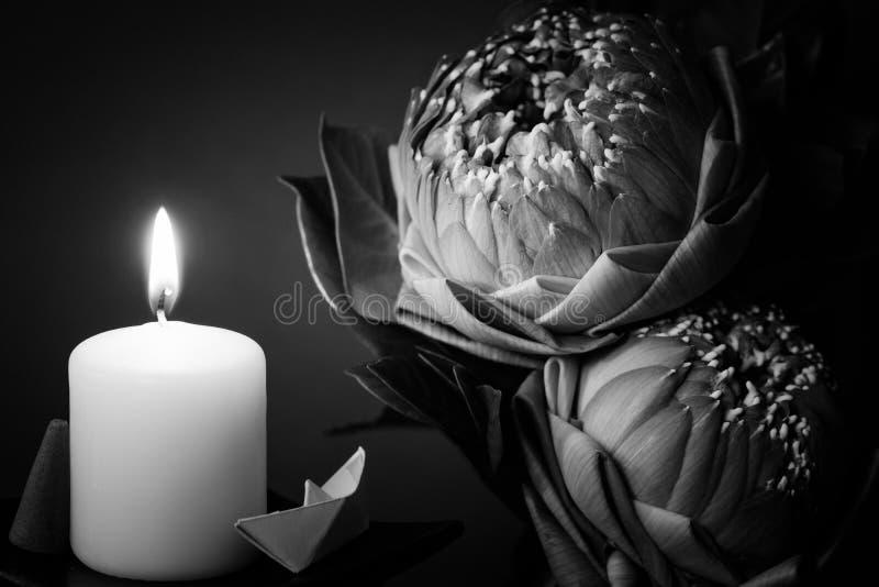 Estilo preto e branco da imagem no flowe de dobramento do lírio ou dos lótus de água fotografia de stock royalty free