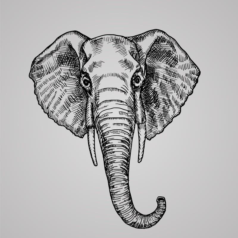 Estilo principal da gravura do elefante Um animal indiano bonito no estilo do esboço ilustração do vetor
