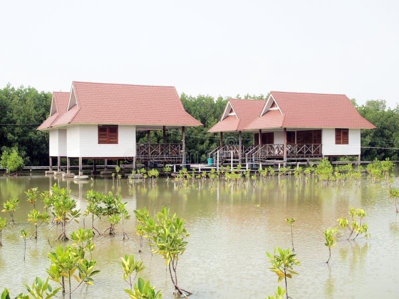 Estilo tailandês das cabanas na floresta dos manguezais imagem de stock royalty free