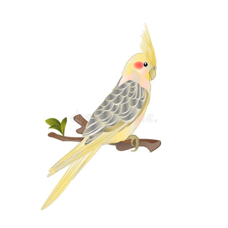 Estilo tropical bonito da aquarela do pássaro do cockatiel amarelo engraçado do papagaio em uma ilustração branca do vetor do vin ilustração royalty free