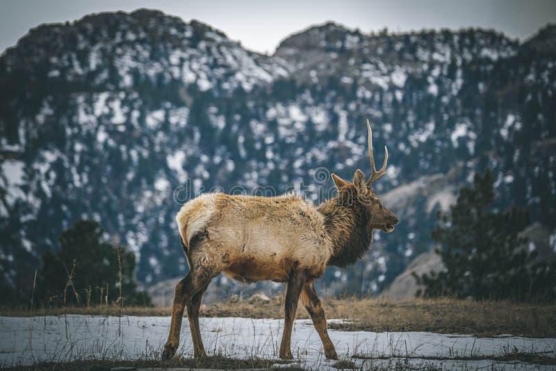 Estimado en el parque Colorado de los estes foto de archivo