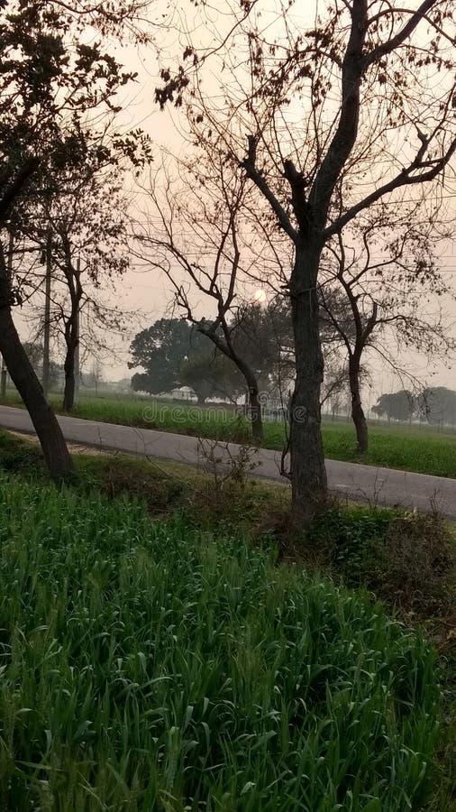 Esto el imagen hermosa de la puesta del sol en el campo de mi pueblo imágenes de archivo libres de regalías