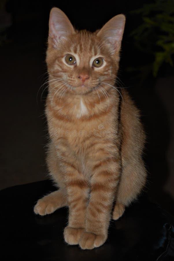 Esto era un gatito hermoso fotos de archivo libres de regalías