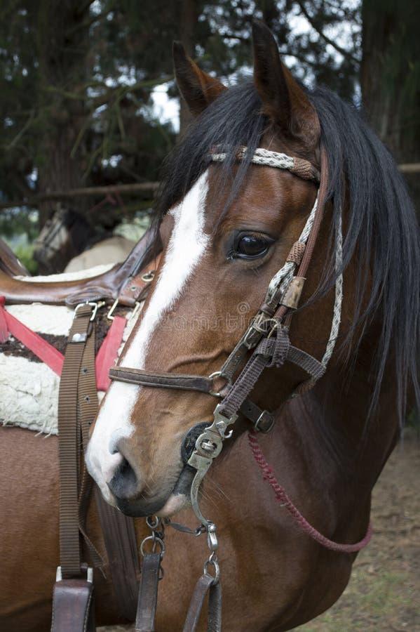 Esto es un caballo grande y marrón fotos de archivo libres de regalías