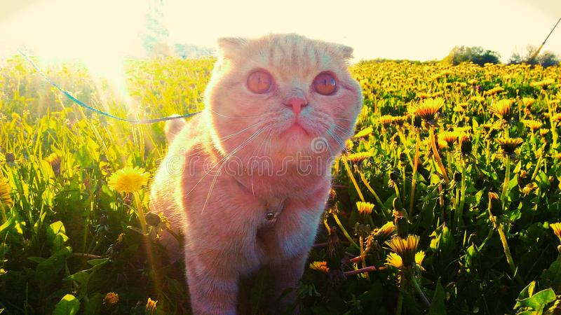 Esto es un gato muy lindo fotos de archivo