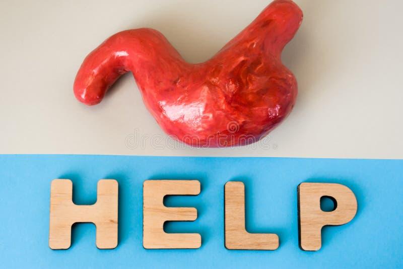 Estomac avec le mot d'aide Le modèle anatomique de l'estomac humain est sur le fond gris, au-dessous des lettres qui font l'aide  photographie stock libre de droits