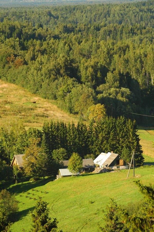 estonia skogkullar arkivfoton