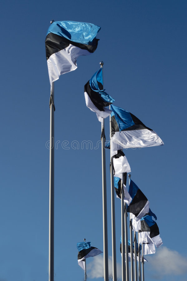 Estonian flags royalty free stock photo