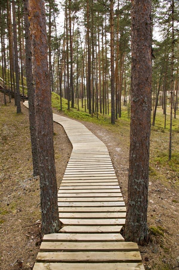 Download Estonian Skog För Boardwalk Arkivfoto - Bild av fotvandra, estonia: 19794490