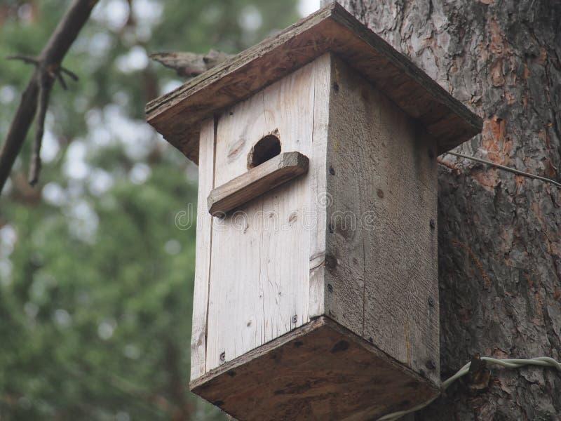 Estorninho perto do avi?rio Bird& artificial x27; ninho de s imagem de stock