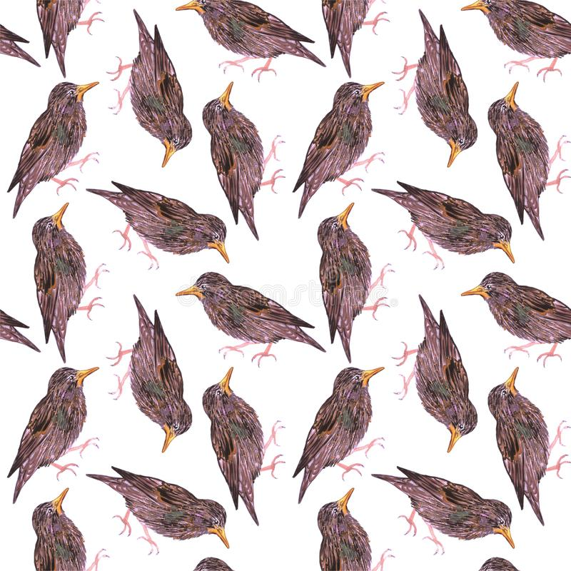 Estornino común o estornino europeo o pájaros inconsútiles de la acuarela del pájaro vulgaris del Sturnus que pintan el fondo libre illustration