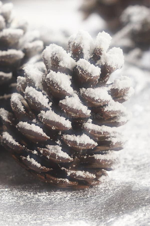Estróbilo de la Navidad fotografía de archivo libre de regalías