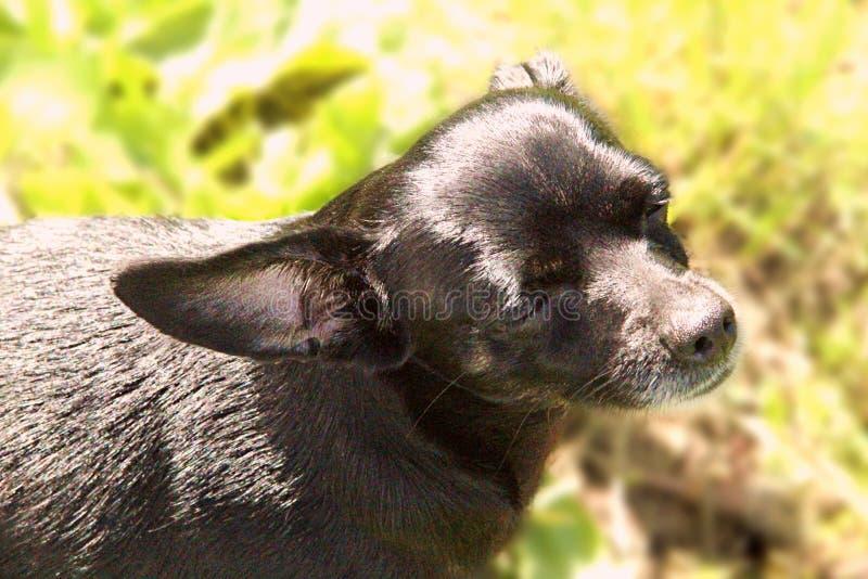 Estrabismos del perro del sol brillante fotos de archivo