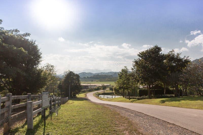 Estrada à exploração agrícola do chá, estrada a cultivar foto de stock