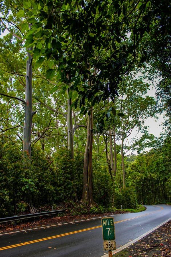 Estrada à floresta úmida tropical de Hana fotografia de stock royalty free