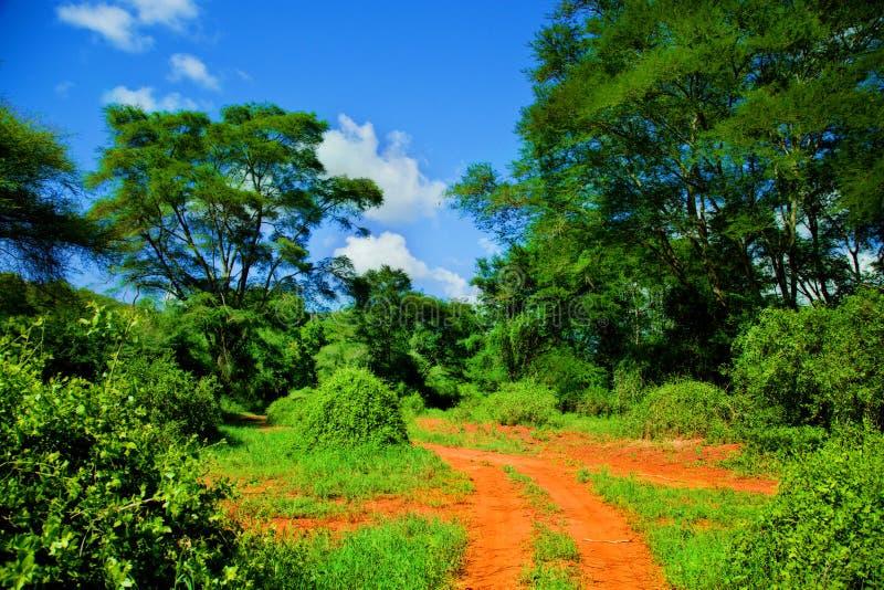 Estrada à terra vermelha, arbusto com savanna. Tsavo ocidental, Kenya, África fotos de stock