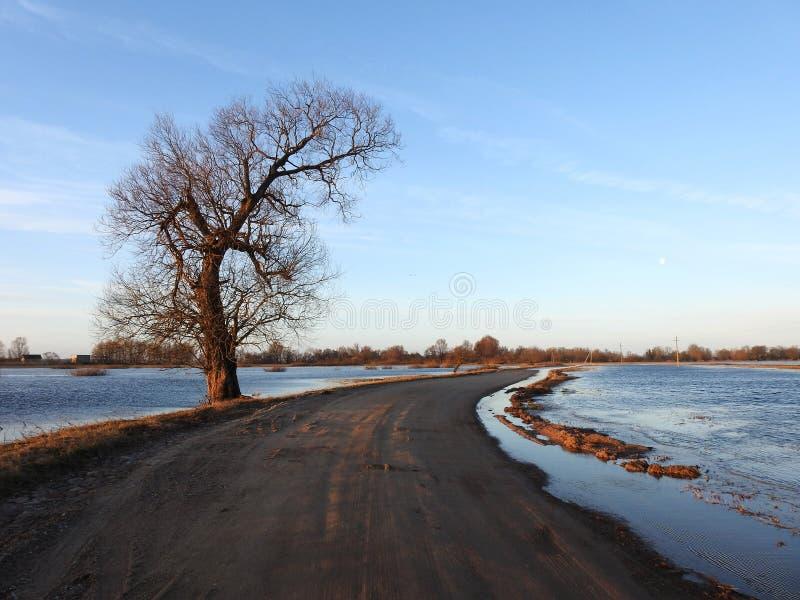 Estrada, árvore e céu do nascer do sol, Lituânia imagem de stock