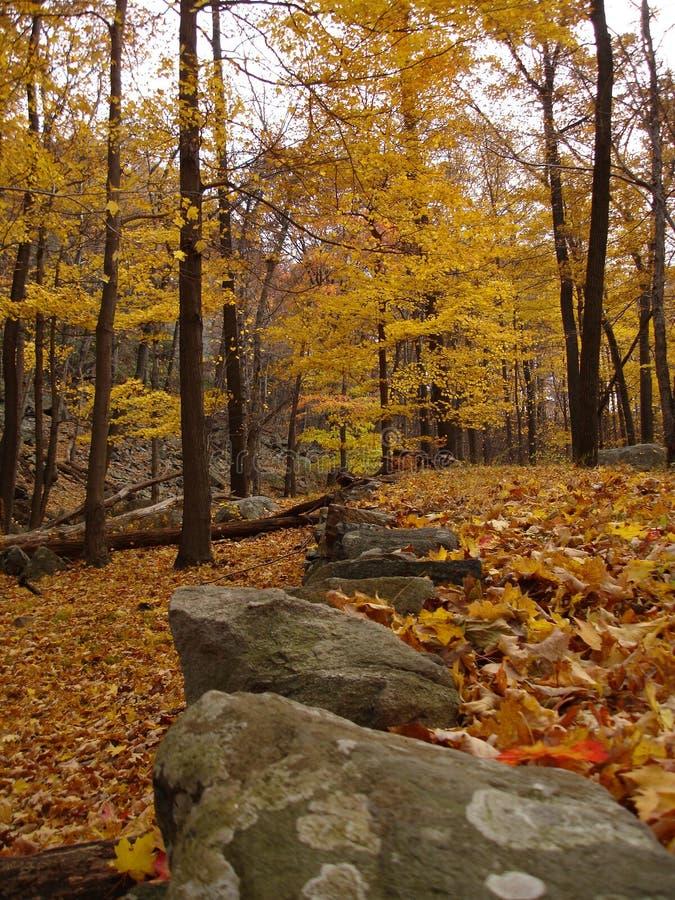 Estrada abandonada coberta pela folha no parque de estado de Harriman, NY.   imagens de stock