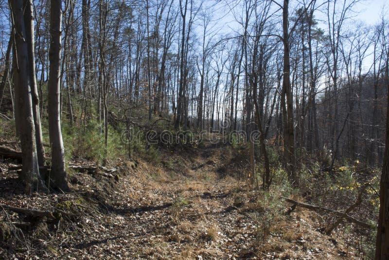 Estrada abandonada na floresta do inverno foto de stock royalty free