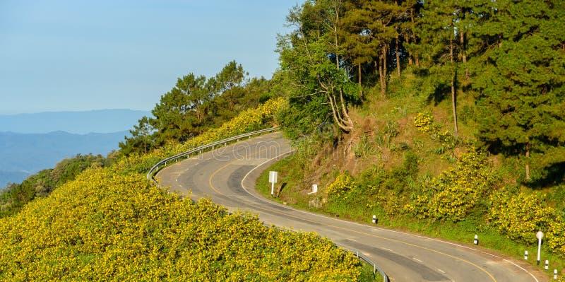 Estrada afiada da curva da montanha com a flor selvagem do girassol mexicano foto de stock