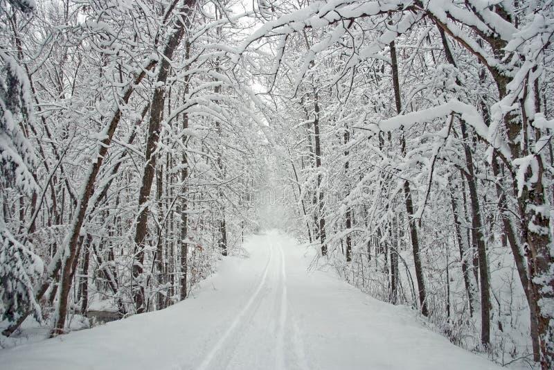 Estrada alinhada árvore do inverno com neve